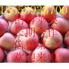 红富士苹果销售产地/红富士苹果最新价格/山东红富士苹果产地
