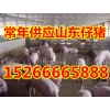 三元仔猪出售15266665888