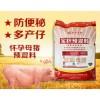 怀孕母猪饲料多产奶通肠道仔猪健康抗病力强