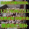 13176962111 山东最大的仔猪交易市场